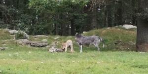 Vereinsausflug in den Wildpark_73